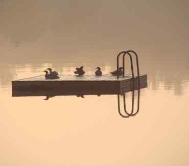 dockbirds